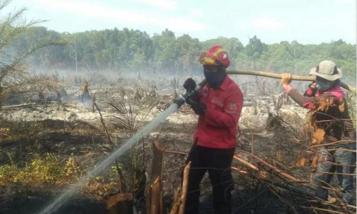 Arara Abadi dan APP Sinar Mas Bantu Padamkan Karhutla di Bunut dan Teluk Meranti Pelalawan Riau